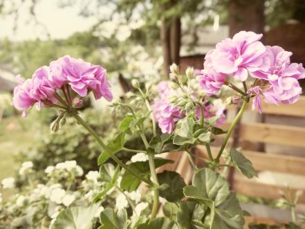 Blumen5