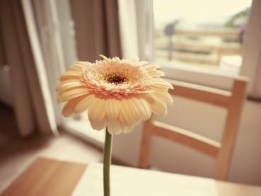 Wohnzimmer_Blume Ambiente